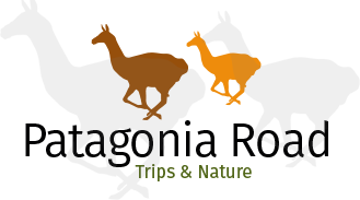 Patagonia Road | South America Custom Trips